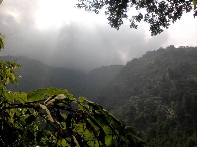 hutan di Gunung Salak terdiri dari hutan pegunungan bawah